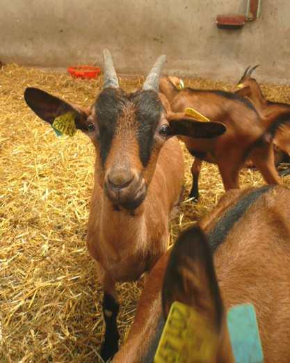 http://maud96.cowblog.fr/images/1/Ressinschevres2.jpg