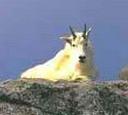 http://maud96.cowblog.fr/images/3/1451832.jpg
