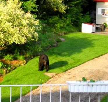 http://maud96.cowblog.fr/images/oursvisiteurdumatin.jpg